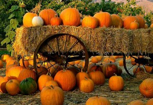 pumpkin-patch 2011